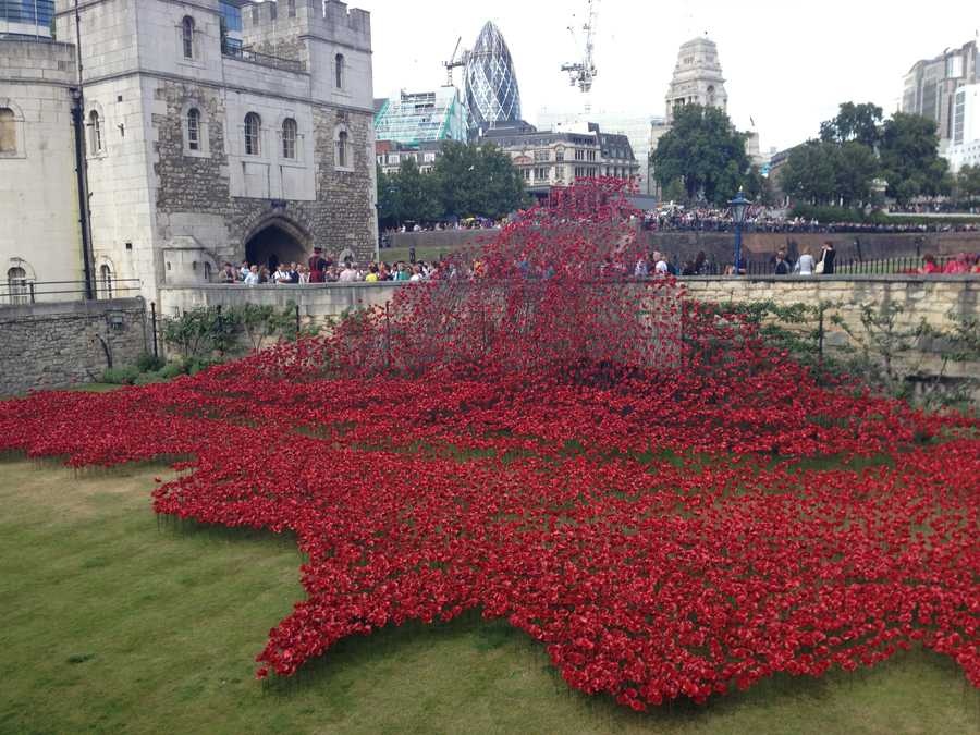 These red poppies at the Tower of London represent all of the English citizens whose lives were lost during World War I.