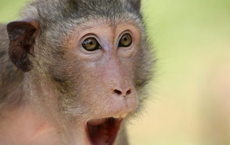 39 crazy things about animals