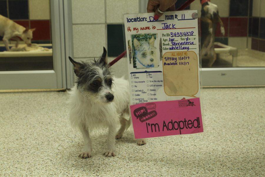 Houston+Humane+Society%3B+Adoption+Center