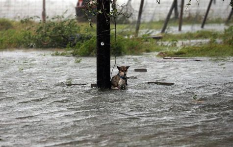 http://www.wideopenpets.com/photos-abandoned-dogs-hurricane-harvey-breaking-worlds-heart/