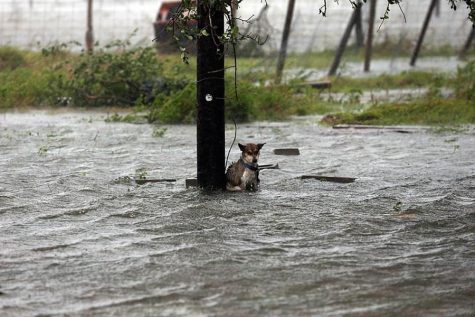 Why Hurricanes Occur