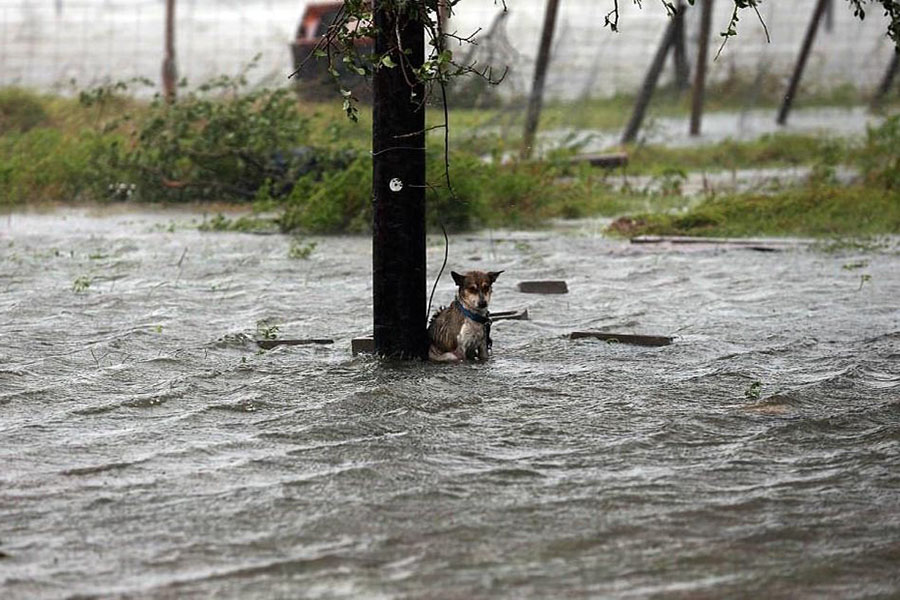 http%3A%2F%2Fwww.wideopenpets.com%2Fphotos-abandoned-dogs-hurricane-harvey-breaking-worlds-heart%2F