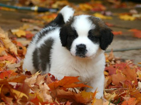 Fall Puppy Quiz!