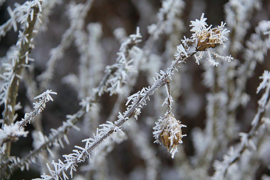 https://cdn.pixabay.com/photo/2017/01/02/11/07/frost-1946502_960_720.jpg
