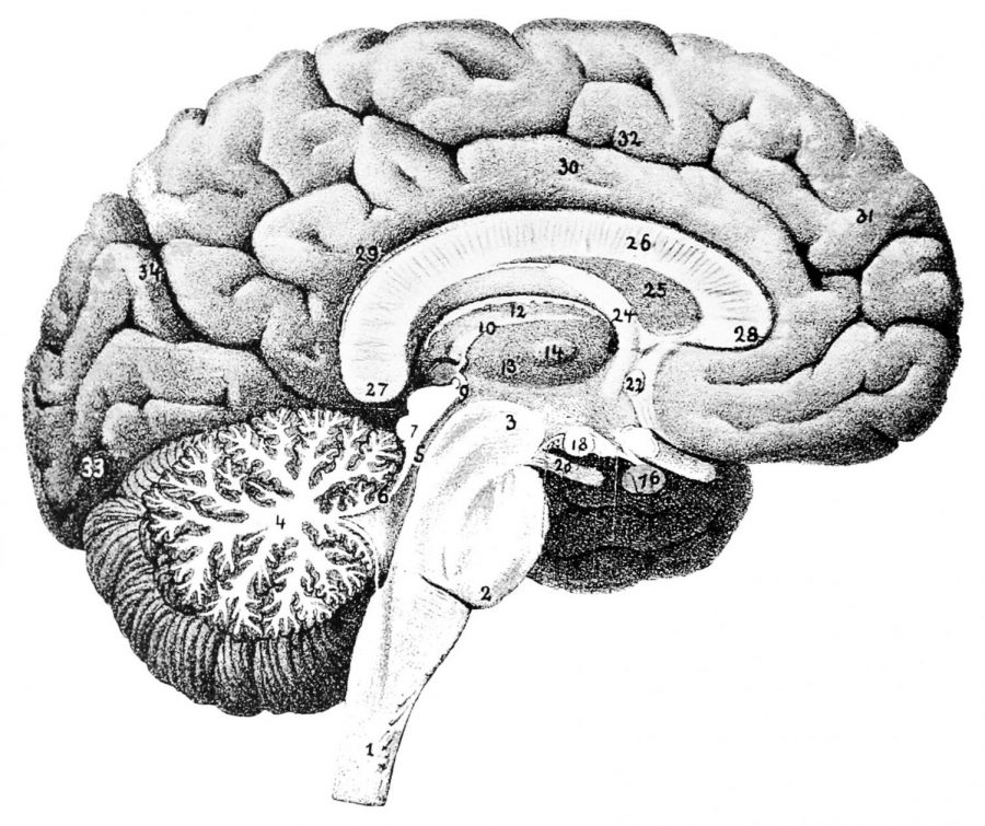 The+brain+is+the+most+complex+organ+in+the+human+body%2C+and+many+things+can+cause+injuries.+