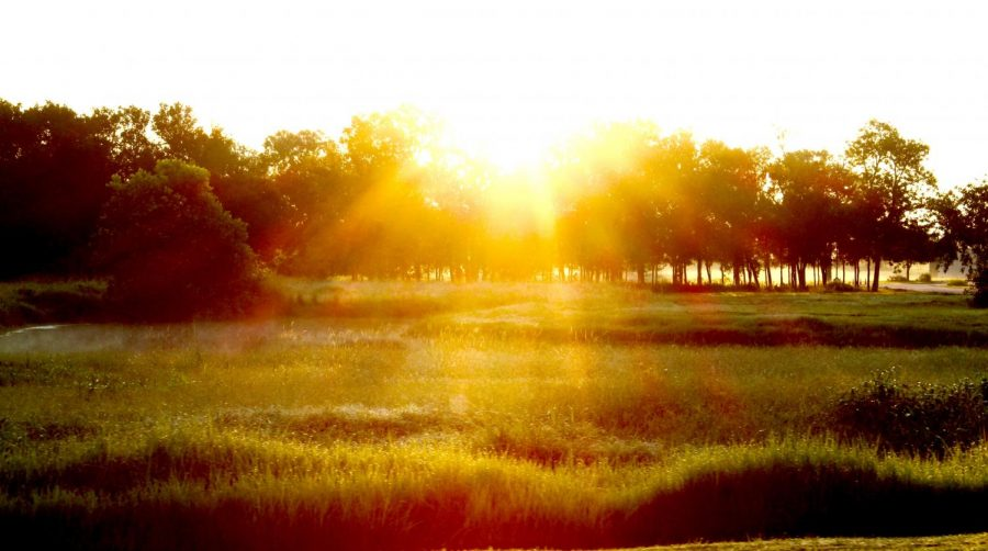 One of nature's most beautiful moments, when the sun breaks through the trees and lights up the Earth with its golden rays.