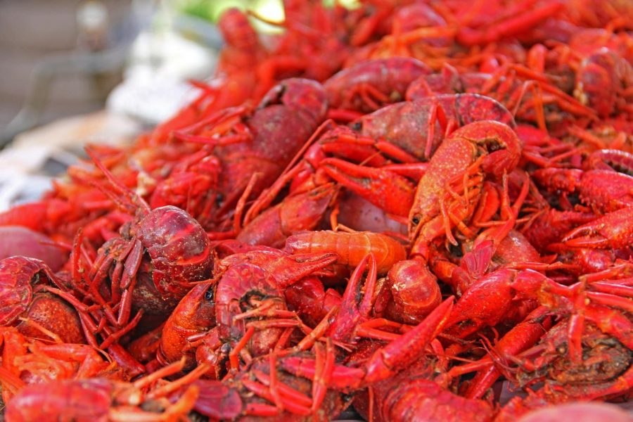 All+You+Can+Eat+Crawfish+Boil+%2821%2B%29