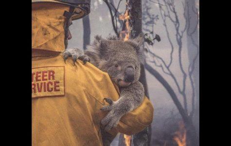 Horrific Wildfires take over Australia
