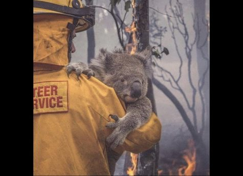 Horrific Wildfires take over Australia