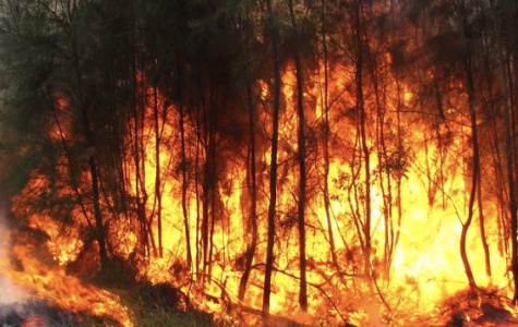 Australian citizens can't do anything but watch the flames swallow their homes.